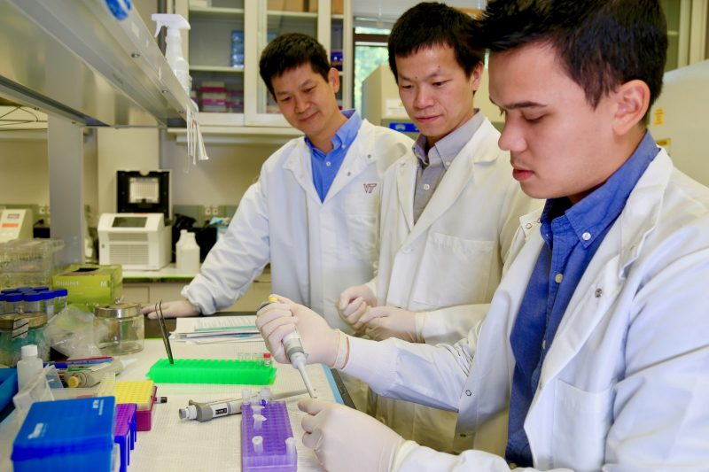 "(from left to right) Hehuang ""David"" Xie, associate professor in the Department of Biomedical Sciences and Pathobiology in the Virginia-Maryland College of Veterinary Medicine; Xiguang Xu, graduate student; Alexander Murray, graduate student. Photo credit: Alex Crookshanks."